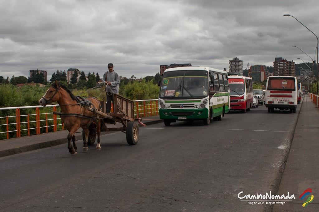 Temuco-6389