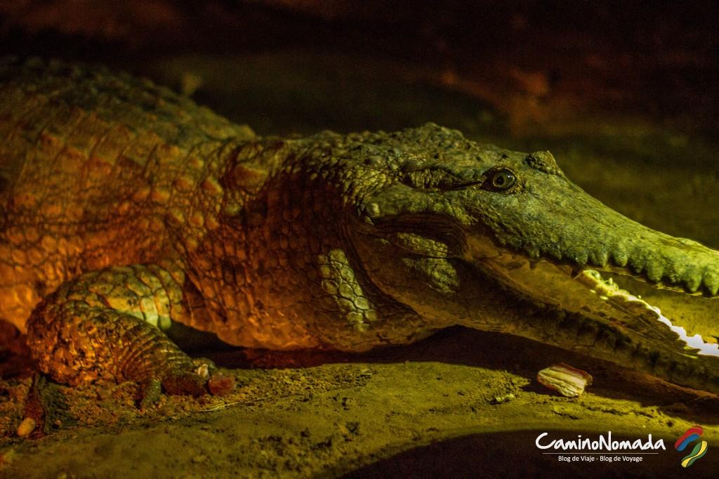 Croc-6693