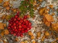 Las flores del Parque Nacional Lesueur