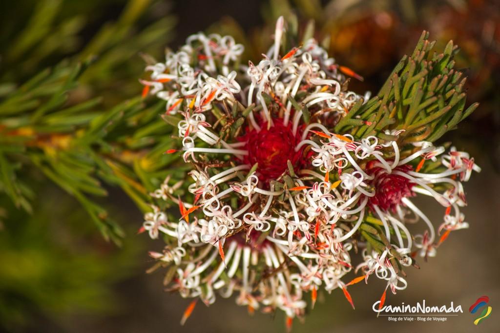 Fleur-Lesueur National Park