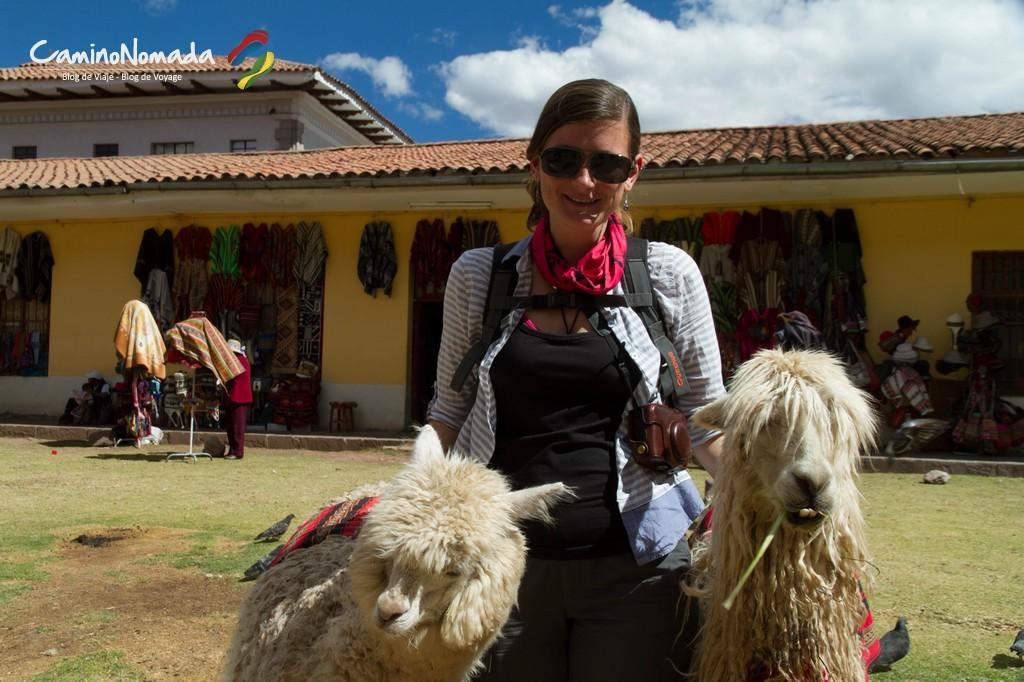 Llamas_y_alpacas_Cusco