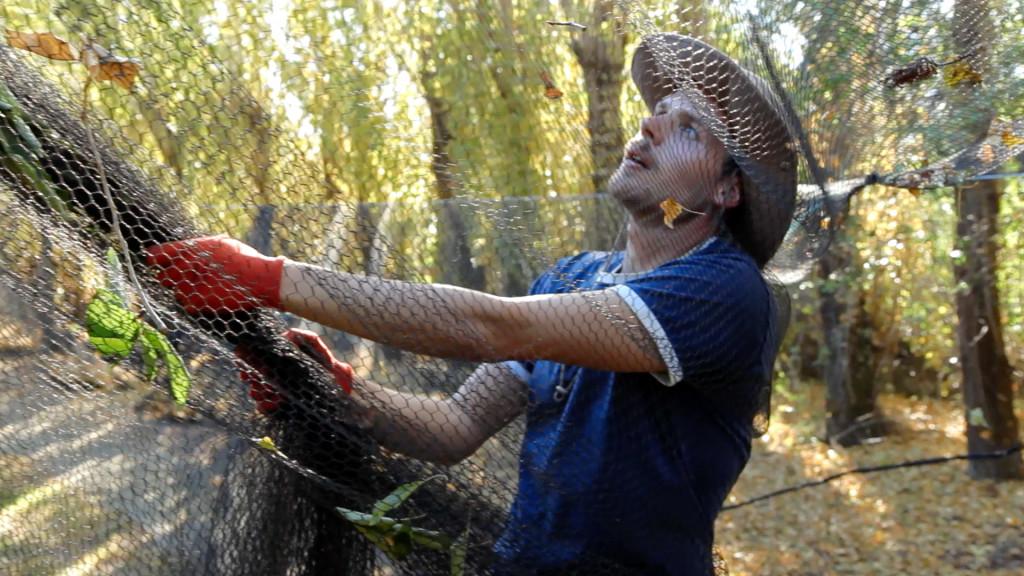 Travailler dans les vergers, un classique de PVTiste en Nouvelle-Zélande | Photo Miléna Grillon