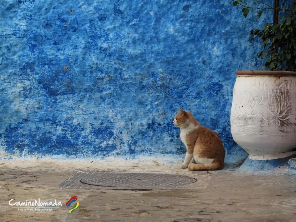 Rabat_kasbah_cat (2)