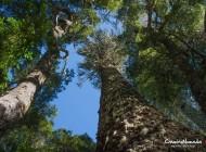 Parque Nacional Nahuelbuta