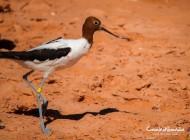 Coup de cœur : Broome Bird Observatory